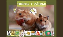 FARINGE Y ESÓFAGO