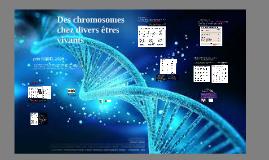 Des chromosomes chez divers êtres vivants
