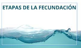 ETAPAS DE LA FECUNDACIÓN