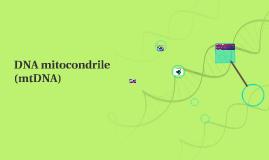DNA mitocondrile (mtDNA)