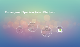 Endangered Species- Asian Elephant