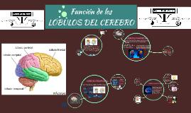 Copy of LOBULOS DEL CEREBRO