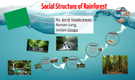 Social Structure of The Rainforest