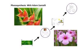 Photosynthisies