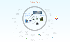 Carbon Cycle Project