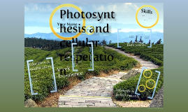Photosynthesis and Cellular Resperation