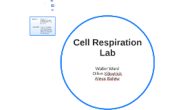 cell respiration lab report Writing a cellular respiration lab report and using calorespiromerty as a means for better understanding how plants acclimate and adapt metabolically to.