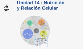 Copy of Unidad 14 : Nutrición y Relación Celular