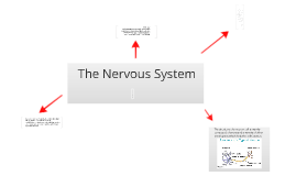 Copy of The Nervous System.