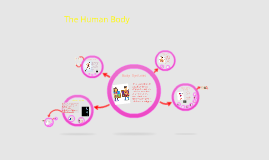 Copy of The Human Body