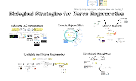 2014 EWI - Biological Strategies for Nerve Regeneration