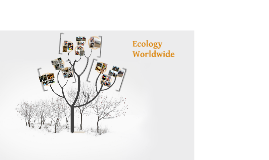 Copy of Ecology Worldwide