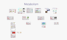 Metabolism (Ex-S Andersson)