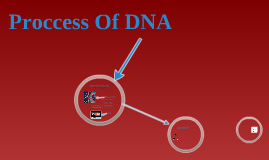 The life of DNA
