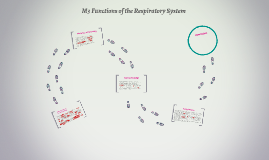 Copy of M3 Functions of the Respiratory System