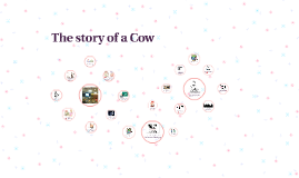 The story of a Cow