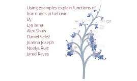 IB Psychology Hormones