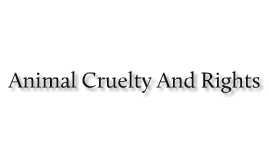Animal Cruelty And Rights
