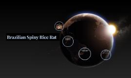 Brazilian Spiny Rice Rat