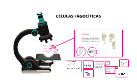 Copy of CÉLULAS FAGOCÍTICAS