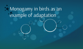 Monogamy in birds as an example of adaptation