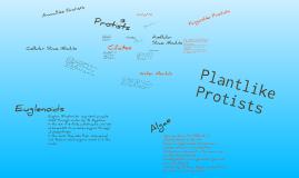 Copy of Protists