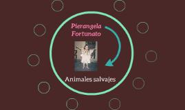 Pierangela Fortunato