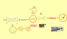 Copy of Líquenes