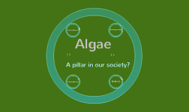 Copy of Algae