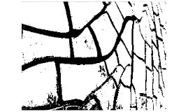 Copy of Burri e gli Essiccatoi di tabacco a Città di Castello
