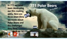 7T1 Polar Bears