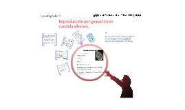 Reproducción por gemación en Candida albicans.