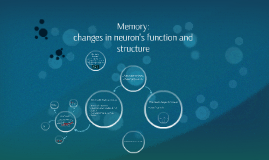Changes in function and structure of neurons in relation to