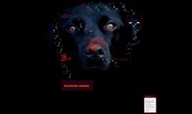 Copy of Animal Welfare