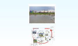 Copy of Shichibe Ver.2