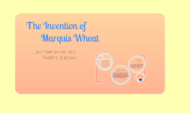 The Invention of Marquis Wheat