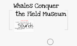 Whales Conquer the Field Museum
