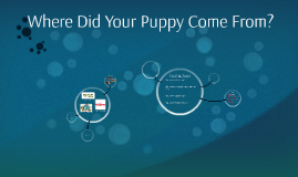 Where Did Your Puppy Come From?