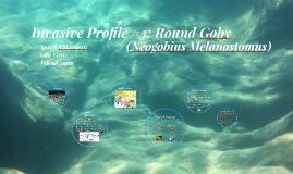 Invasive Profile #3: Round Goby