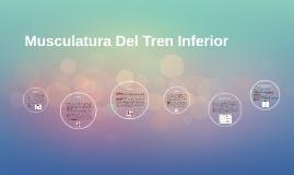 Copy of Musculatura Del Tren Inferior