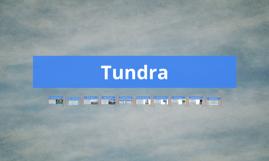 Copy of tundra