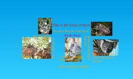 Marqwianna Anjanae Samules' Koala Project