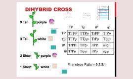 Dihybrid Crosses