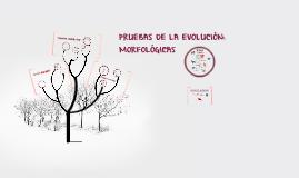 PRUEBAS DE LA EVOLUCIÓN: MORFOLÓGICAS