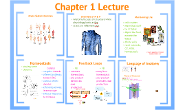 Anatomy & Physiology, Chapter 1 Lecture