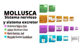 Copy of MOLLUSCA