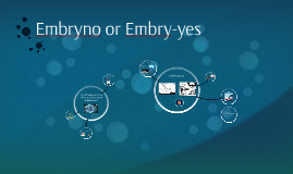 Embryonic Stem Cell Controversy