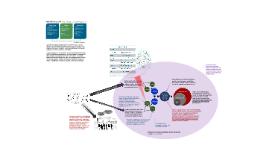 Building Occupant Behavior/Decision Making Flow Diagram