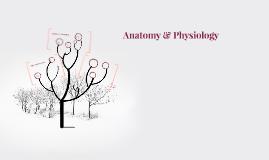 Origin of Human Anatomy