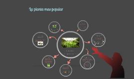 Copy of La marihuana